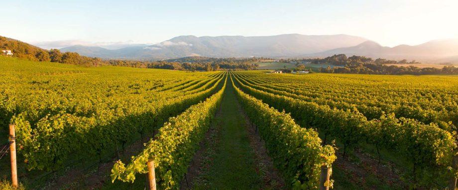 yar - winery