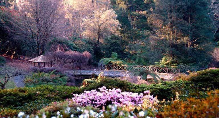 national-rhododendron-garden2
