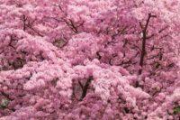 national-rhododendron-garden3