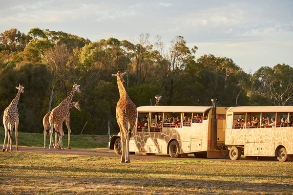 Sunset Safari Trial_Werribee Open Range Zoo2